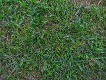 Bodenbeschaffenheit des gr?nen Grases stockfoto