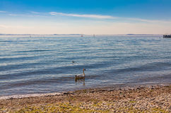 Bodensee Stock Photo