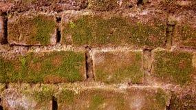 Bodenstange mit gewachsenem Gras Lizenzfreies Stockfoto