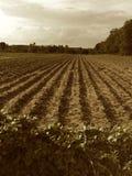Bodenvorbereitung stockbild