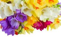 Boder цветков freesias Стоковая Фотография RF