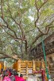 Bodhgaya, Bihar, India - 12.21.2017; Bodhi Tree at Mahabodhi Tem royalty free stock photography