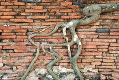 bodhi根源结构树 库存照片