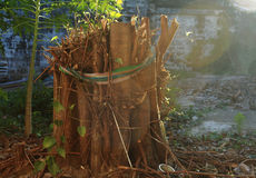 Bodhi结构树 免版税库存照片