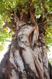 Bodhi-Baum Lizenzfreie Stockbilder