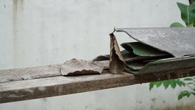 Bodhi-Blatt und gebrochene Dachplatte stockbild