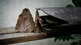 Bodhi-Blatt und gebrochene Dachplatte lizenzfreies stockbild