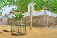 Bodhi drzewa świątynia Zdjęcia Stock