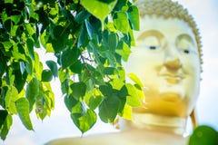 Bodhi drzewo wśrodku Wata Muang angthong zdjęcie royalty free