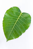 The Bodhi leaf Stock Photos