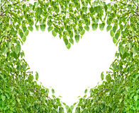 Bodhi Leaf Heart Royalty Free Stock Photography