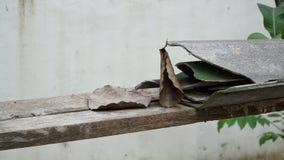 Bodhi liść i pękająca dachowa płytka Obraz Stock