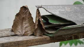 Bodhi liść i pękająca dachowa płytka Obraz Royalty Free