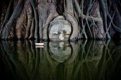 Bodhi träd av vatten Arkivbild