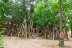 Bodhi träd Crutched ritual i den Thailand templet Arkivbilder