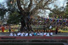 Bodhi träd i Lumbini Buddha födelseort royaltyfri fotografi