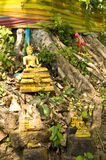 Bodhi Tree Royalty Free Stock Image