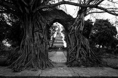 Bodhi Tree gate to pagoda, Ayutthaya. Ancient miracle Gate way of bodhi Tree to ruined pagoda in Wat Phra Ngam temple, Ayutthaya ,Thailand. Black and white Royalty Free Stock Photos