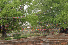 Bodhi tree in Lumbini (Buddha's birthplace) Royalty Free Stock Image