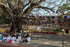 Bodhi tree in Lumbini Buddha's birthplace Royalty Free Stock Photos