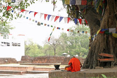 Bodhi tree in Lumbini and monks Stock Images