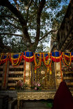 The Bodhi Tree, Mahabodhi Temple of Bodh Gaya,India at Puja festival Stock Images