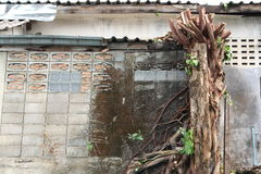 Bodhi tree Stock Photo