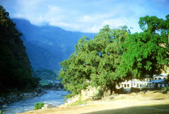 Bodhi trees along the   Kali Gandaki Stock Photos