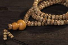 Bodhi stock image