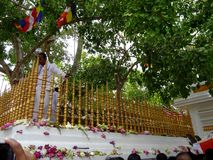 Bodhiya Srimaha - anuradhapura - Σρι Λάνκα στοκ εικόνες με δικαίωμα ελεύθερης χρήσης
