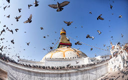 Bodhnath stupa with flying birds Stock Photography