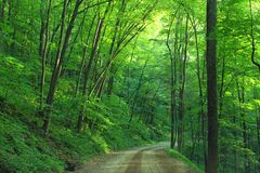 Bodine Mountain Road stock photography