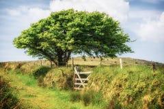 Bodmin hed cornwall England UK royaltyfria foton
