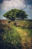 Bodmin hed cornwall England UK arkivbild