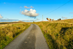 Bodmin Moor. A country lane on Bodmin Moor in Cornwall with Roughtor in the far distance stock images