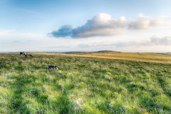Bodmin Moor. Grassy plains of Bodmin Moor in Cornwall Royalty Free Stock Photo