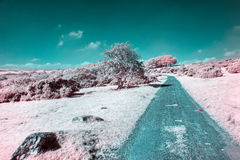 Bodmin Moor in Infrared. An infrared photo of a country lane on Bodmin Moor in Cornwall Stock Photo