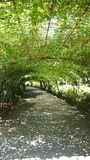 Bodnant arbeitet Laburnum-Bogen im Garten Lizenzfreies Stockbild