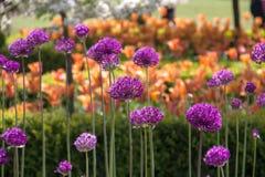 Bodnant garden Royalty Free Stock Images