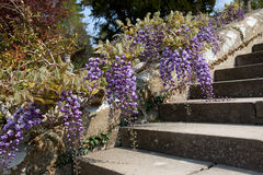 Bodnant Gardens Royalty Free Stock Image