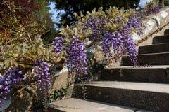 Bodnant Gardens Stock Photography