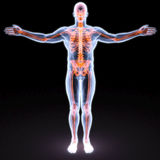 Body. Man's body under X-rays. bones are highlighted in red Stock Photography