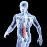 Body Stock Image