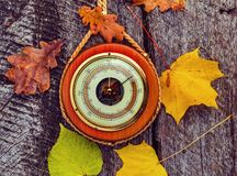 Body of barometer on trunk of old maple tree royalty free stock photo