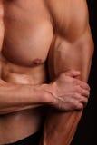 Body Builder flexing his biceps stock image