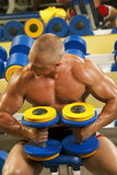 Body builder lifting weights Royalty Free Stock Photography