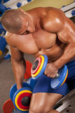 Body builder lifting weights Royalty Free Stock Image