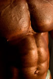Body-builder's body Stock Images