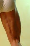 Body builder thigh rear veiw. Rear veiw body builder leg green background Royalty Free Stock Image