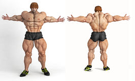 Body builder Stock Image